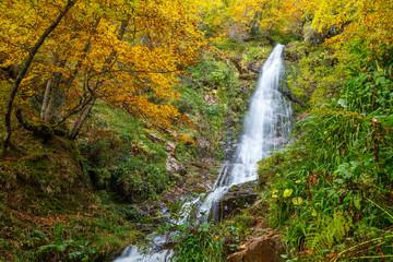 Hayedo de Montegrande con sus colores otoñales y Cascada del Xiblu. Ruta de senderismo. Cordillera Cantábrica, Asturias, España.