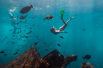 Wall Mural - Young woman snorkeling and skin dives in the tropical sea over the shipwreck. USAT Liberty shipwreck in Bali, Indonesia