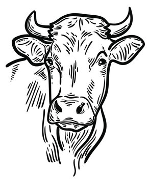 vector illustration of farm animal cow head, ideal for label, logo, sketch style illustration