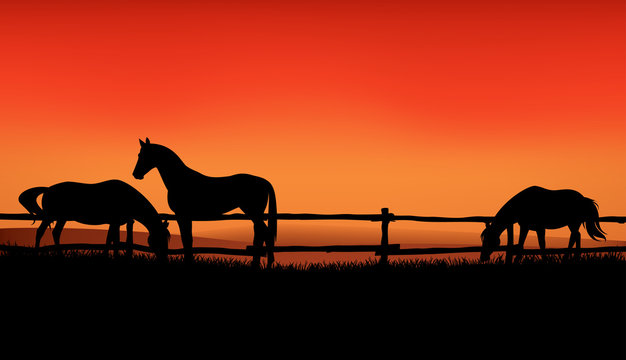 herd of farm horses grazing at meadow behind wooden fence - sunset evening scene on the ranch vector silhouette design