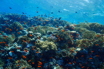 Fototapeten Riff coral reef at the Red Sea, Egypt
