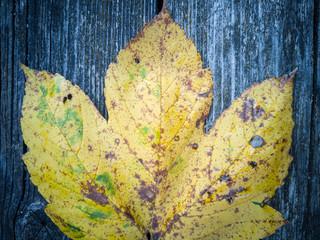 Maple Leaf On Wooden Background