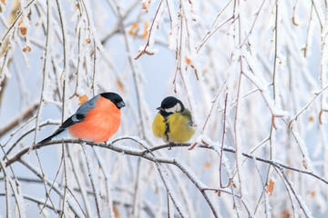Zelfklevend Fotobehang Vogel two birds titmouse and bullfinch are sitting on a branch nearby in the winter holiday park