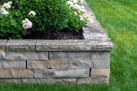 A natural stone retaining wall with matching coping creates a raised planter bed which has been planted with white roses.  It is the perfect height to sit on, expanding outdoor seating in the garden.