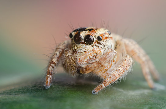 baby jumping spider on a leaf