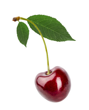 Cherry with green leaves  isolated on white background with clipping path