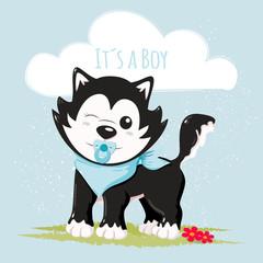 Cute husky it´s a boy