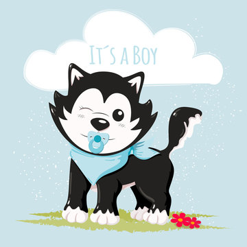 Cute husky it´s a boy