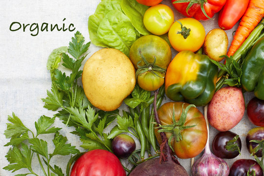 Variety of ripe organic fresh vegetable harvest and text Organic
