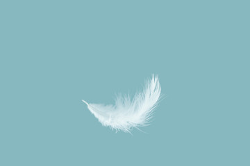 Soft white feather falling down in the air