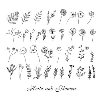 Cute hand drawn set of graphic floral and herbal elements. Doodle vector illustration for wedding design, logo and greeting card.  .