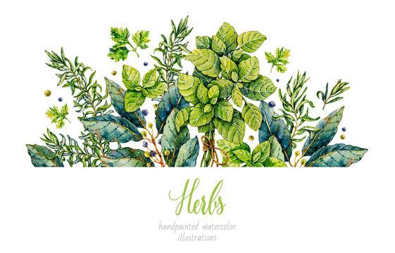 Watercolor rosemary, basil, bay leaf, parsley. Herbs. Watercolor botanical hand drawn illustration. Watercolor plants.