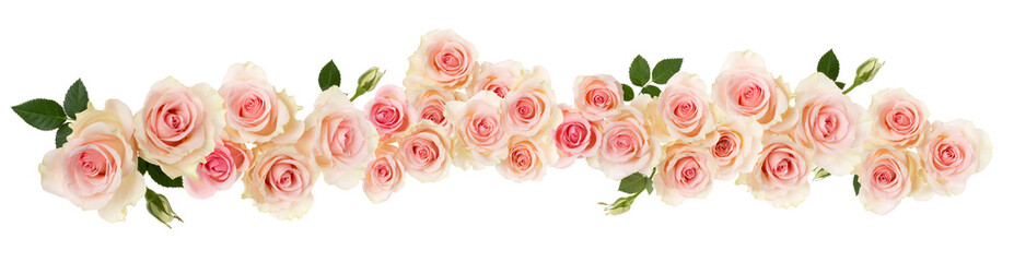 Papiers peints Roses pink Rose flower border isolated on white background cutout. Banner. Wedding concept.