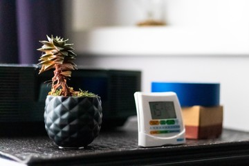 low angle closeup shot of a small plant and an alarm on a bedside table in the room