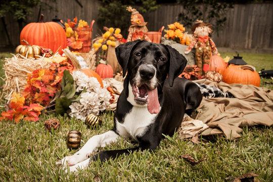 dog in pumpkin patch autumn