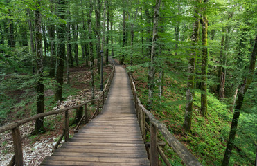 Keuken foto achterwand Weg in bos camino en el bosque
