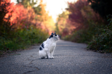 street cat on a forest path. Homeless cat on the background of the autumn park. help animals Wall mural