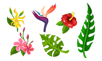 Tropical Plants Vector Illustrated Set. Different Exotic Flora Collection