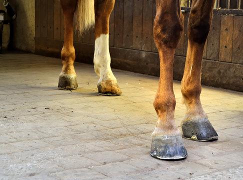 Jambes de cheval dans un box