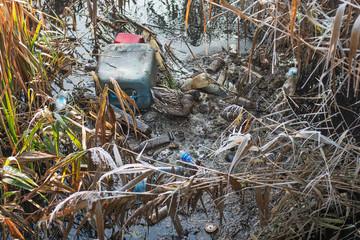 Fototapeta Plastik w rzece obraz