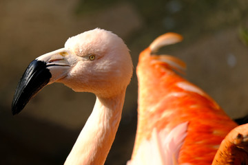 In de dag Flamingo flamingo in pond