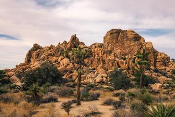 Desert trail in Joshua Tree National Park,