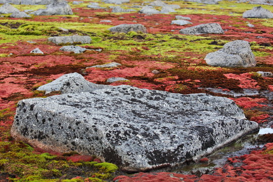 Arctic moss - polar colors