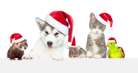 Big group of the pets wearing a red christmas hats above white banner. Empty space for text. Isolated on white background