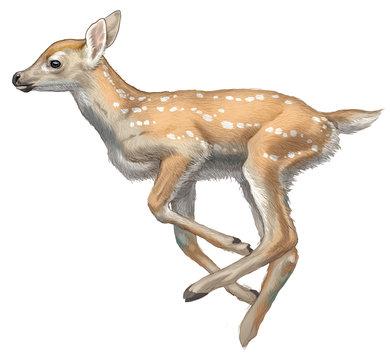 deer animal mammal fawn summer spring