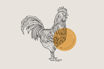 Retro engraving rooster. Hand-drawn picture with a poultry. Can be used for menu restaurants, for packaging in markets and shops. Vector vintage illustrations.