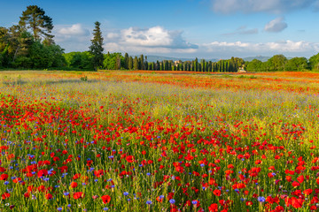 Poster Toscane Spring Meadow Filled with Poppies, Pienza, Val d'Orcia, Tuscany, Italy.
