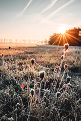 Wall Murals Gray traffic Beautiful wild nature meadow with frozen grass and flowers on a winter morning with golden sunrise light and colorful rainbow waterdrop reflections. Idyllic nature landscape