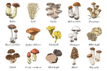 Fototapeta Hand drawn edible mushrooms collection obraz