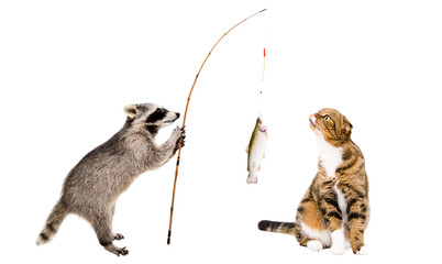 Cat and raccoon with a trout caught on a fishing rod, isolated on white background