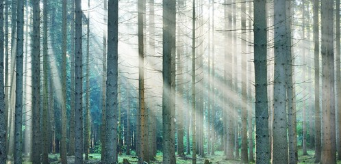 Printed roller blinds Bamboo Sun rays in a fog in a misty morning green forest. Osnabruck, germany