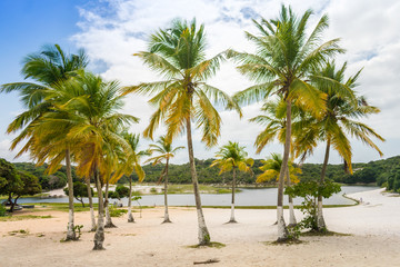 Coconut trees by the Abaete Lagoon, famous landmark of Itapua neighborhood in Salvador, Bahia - Brazil