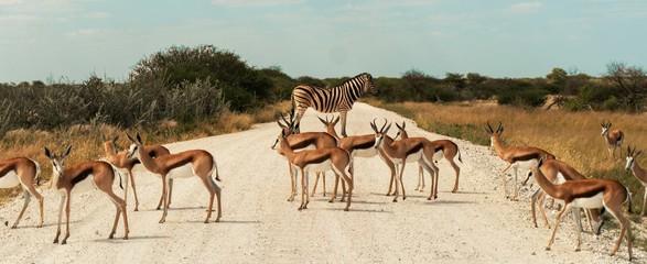 Garden Poster Antelope Wildlife harmony