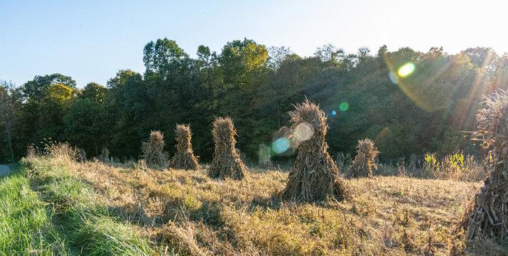 Ohio countryside landscape with Amish cornstalks in Autumn