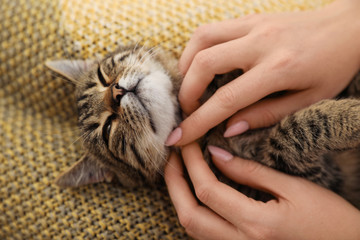 Woman petting cute tabby cat at home, closeup