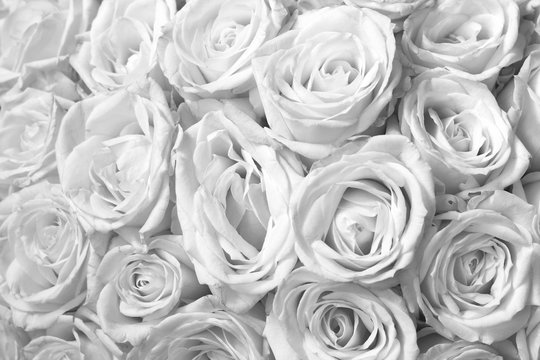 Black and white background with beautiful white roses