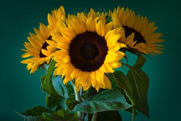 Fototapeta słoneczniki na zielonym tle obraz
