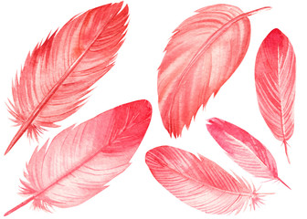 set of pink flamingo feathers on an isolated white background, watercolor illustration, painting