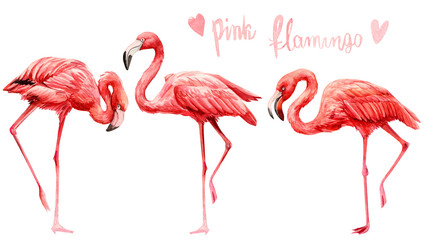 set of cute pink flamingo birds on an isolated white background, watercolor illustration, painting