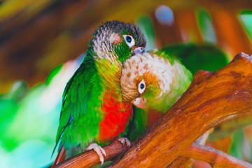 Poster Perroquets colorful parrot on branch
