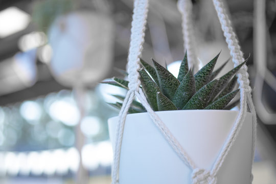 A background of hanging succulent plants as interior design decorations.