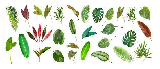 Collection of different Tropical leaves isolated on white background. Wall mural