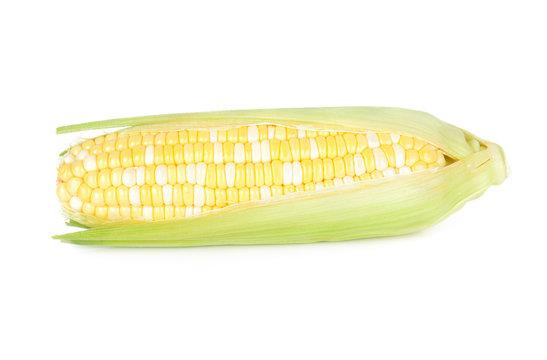 fresh bi colored white and yellow sweet corn on white background