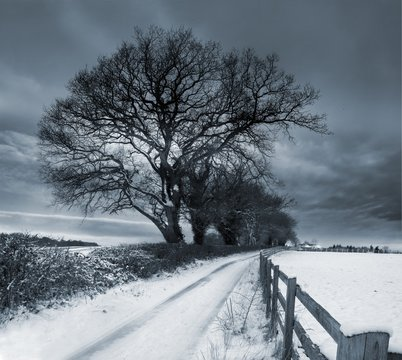 Bare trees on a road covered with snow in Oxfordshire in the UK