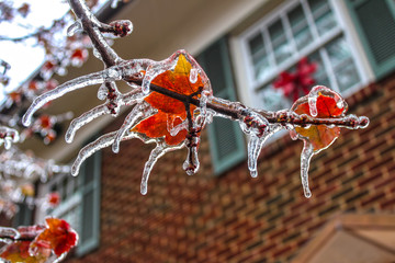 ice shouded colorful maple leaves on a branch with every point of the leaves an icicle - selective focus and bokeh background of two story house