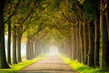 Allee im Herbstanfang Fototapete